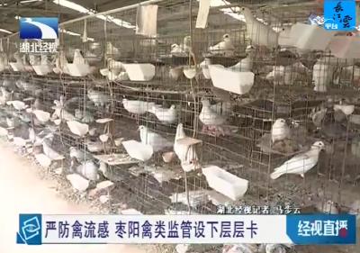 嚴防禽流感 棗陽禽類監管設下層層卡