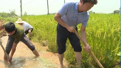 """应城:调水1800万方让8万亩农田""""解渴"""""""