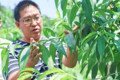精准扶贫下的新产业,建始农民荷包鼓起来