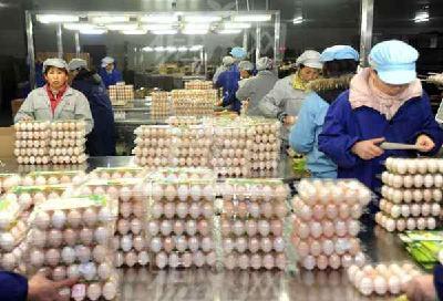 湖北蛋品出口 稳居数量第一 期待收入第一