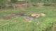 干旱造成全省717.71萬人受災 鄂北地區旱情最重