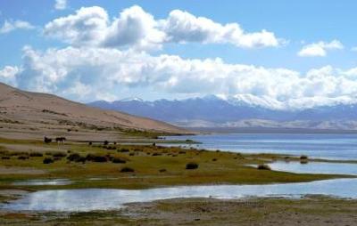 生态环境部:中国近20年来新增植被覆盖面积居全球首位