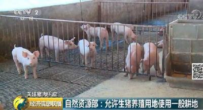 支持养猪!又一国家部门出大招 猪肉价格啥时候能稳