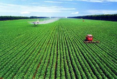 全年粮食生产再获丰收 预计总产量保持在1.3万亿斤以上