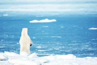 全球变暖、不正常降雪…气候正重建适者生存法则?