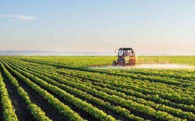 """""""三农""""这一年:粮食产量创新高 生猪生产现回暖"""