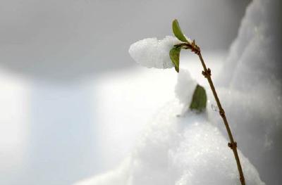 武汉提前部署融雪防冻措施 首次提出绿色环保融雪理念 今年除雪尽量少用工业盐