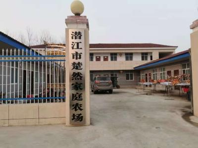 省广电局对口扶贫村合作企业 万余斤菜薹驰援武汉   众志成城抗疫情 湖北乡村在行动