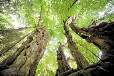 """罗田建古树名木展馆产生多重效应 古树""""开口说话"""" 激活生态文化"""