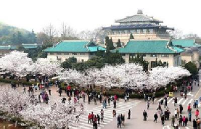 复壮樱园老树 补栽新樱花树 施肥种植绿篱 武大樱花大道今春将展美丽新颜