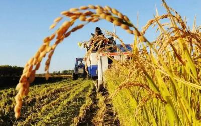 两部门发文促进返乡留乡农民工就地就近就业创业