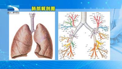 专家介绍支气管镜在新冠肺炎治疗中的作用