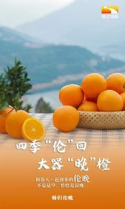 """9张图带你认识大器""""晚""""橙的""""橙中之皇""""——秭归伦晚"""