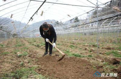 巴东凉伞坡村疫情防控、春耕生产、劳务输出三不误