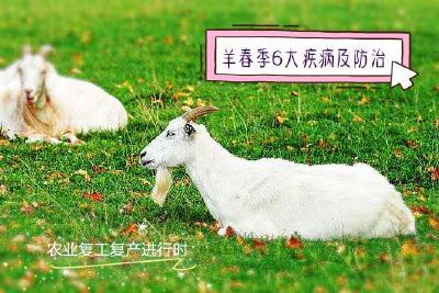 魅力田园|羊春季6大疾病及防治!