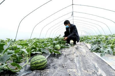 鲜果种植开启富民路 赤壁农业产业化发展形势喜人