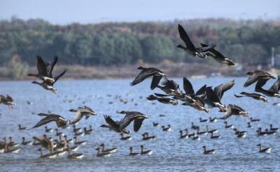 新入选国家重要湿地名录 野生鸟类达3万多只 江夏安山湿地:静谧与野性共存