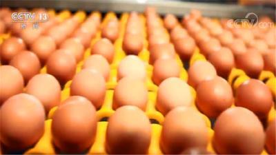 全国鸡蛋价格持续低位运行 进入6月份价格或有所上升