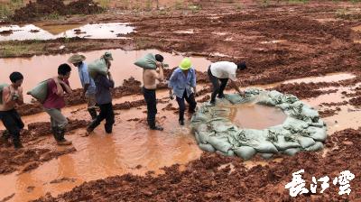 府澴河水位持续上涨 千年古镇黄花涝受威胁