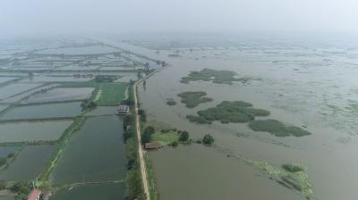 受强降雨影响 湖北长湖超历史最高水位