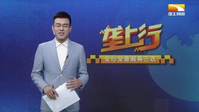 """""""吃瓜群众""""有口福 江城西瓜开启""""一元档"""""""