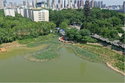 武汉南湖巨变!水清可濯缨!