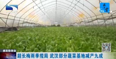 超长梅雨季搅局 武汉部分蔬菜基地减产九成
