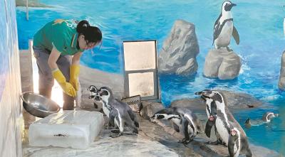 空调房、游泳池、大冰块…… 瞧!动物花式消暑