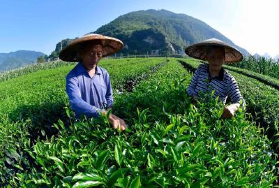 """丰收节里话""""丰收""""!中国农民的新变化"""