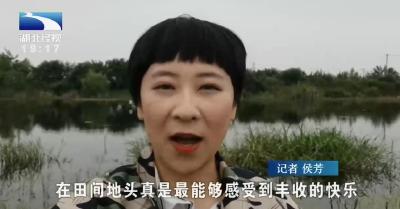 侯芳体验:一条鱼带动一条龙, 记者化身渔夫探访武昌鱼产业