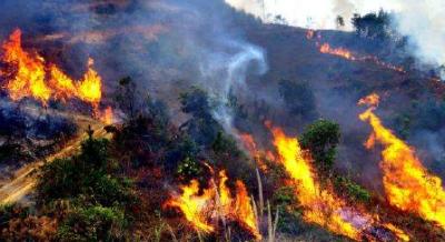 美国俄勒冈州发生山火 至少造成25人死亡