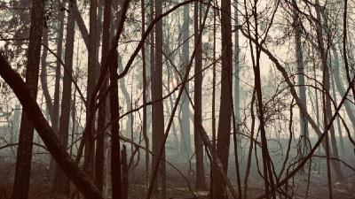 史无前例!美国加州山火烧不停 超5万人流离失所