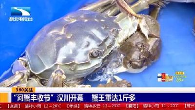 """360关注: """"河蟹丰收节""""汉川开幕 蟹王重达1斤多"""