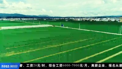荆楚益农 | 虾稻田套养螺蛳 一亩增收几千块