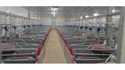 武汉市首家数字化智能化猪场完工投产