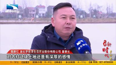"""礼赞新时代劳动者:陈新红:""""慧""""种田的新农人"""