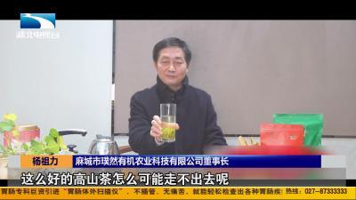 【荆楚楷模】杨祖力: 振兴老区茶产业 带动村民脱贫致富