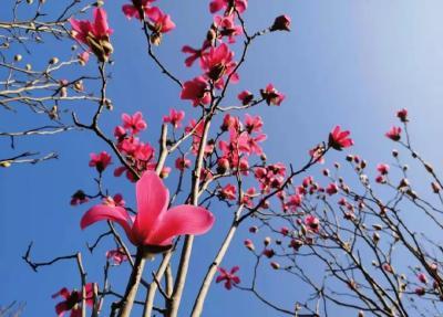 湖北赏花地图 | 宜昌的花都开好了!就等你了!