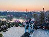 东湖樱花园早樱绽放
