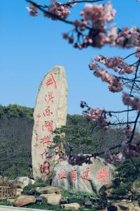 相约春天赏樱花 我在东湖磨山等你