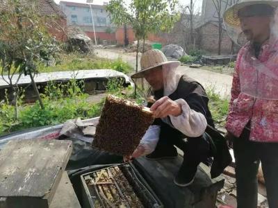 """襄州村民加保山:""""蜂窝窝""""里酿甜蜜"""