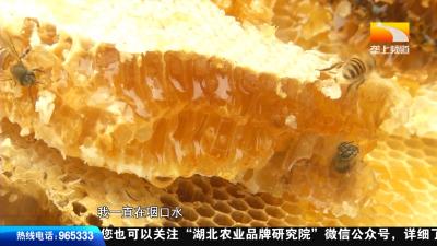 【来凤养生三宝】小垄女心急想吃蜜,却被吓到惊魂失措