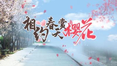 海报 | 官宣!相约春天赏樱花,鄂在等你!