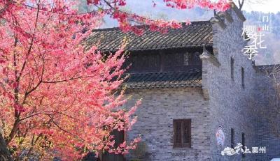 鹿门山樱花季赏樱攻略