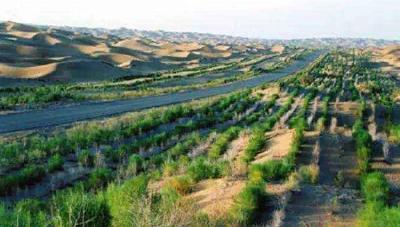 防护林为何挡不住沙尘?中国气象局回应