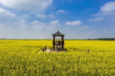 来蔡甸区消泗乡渔樵村看油菜花海,寻找最盎然的春意吧!