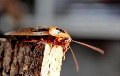 蟑螂竟成宠物?看一眼就头皮发麻……