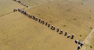 目标亩产1200公斤,袁隆平超级杂交水稻再冲世界纪录