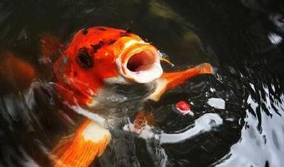 怎样判别养鱼的鱼塘水质?