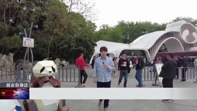 又萌又酷!玩转成都大熊猫博物馆